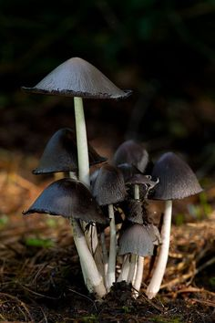 black mushrooms <3