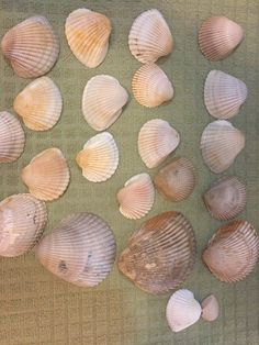 Haha! After seeing this Christmas idea, I will never look a seashell the same way again!
