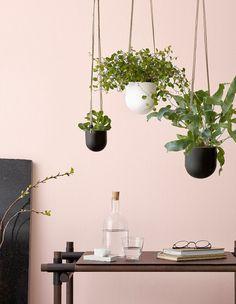 Miniamppeli hanging basket
