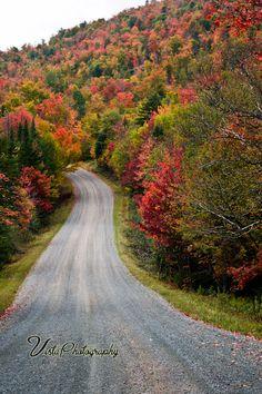 Moderate Vermont foliage - http://jeff-foliage.com/2011/09/13/finding-peak-fall-foliage-in-new-england/#
