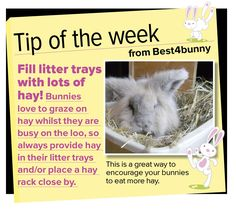 Bunny tip - week 29. Fill your bunnies litter trays up with hay
