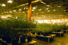 Ohio licensing fees for medical marijuana growers would be among the highest in the country if rules drafted by the Ohio Department of Commerce are approved.http://goo.gl/u65H9S #cannabiz #marijuanalegalization #Cannabis #Medicalmarijuanaindustry #MarijuanaNews #Ohio