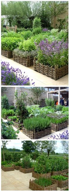 Raised beds with beautiful basket-weave borders- Elegant kitchen garden sponsored by Lady Carole Bamford at Chelsea 2008