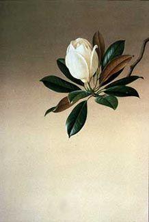 Magnolia grandiflora Paul Jones Born Sydney, Australia, Acrylic on paper (cool leaves) Art Floral, Motif Floral, Flor Magnolia, Magnolia Flower, Magnolia Trees, Botanical Flowers, Botanical Prints, Silk Flowers, Tattoo Plant