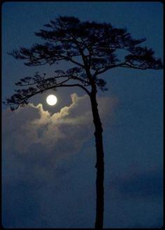 Eye in the sky -  Blue moon over the pine tree in Rikuzen Takada, Japan..