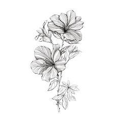 Flor Tattoo, Moth Tattoo, Nature Tattoo Sleeve, Nature Tattoos, Sweet Tattoos, Dream Tattoos, Tatoo Rose, Winter Tattoo, Realistic Flower Tattoo