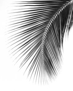 Palm Leaf Print Black And White Photography Abstract Tropical Leaf Summer Art Tropical Palm Leaves 8 x 10 inches Unframed