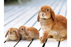 cute-rabbit - bunnies Picture