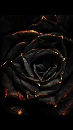 Beautiful Rose Flowers, Black Flowers, Red Roses, Gold Flowers, Black Wallpaper, Flower Wallpaper, Arte Obscura, Pics Art, Dark Art