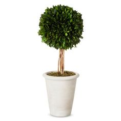 """Mantel decor? Could be accented for various seasons. Smith & Hawken® Boxwood Topiary in Pot - 16"""""""