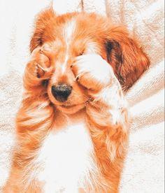 Cute Wild Animals, Baby Animals Super Cute, Cute Baby Dogs, Baby Animals Pictures, Cute Animal Photos, Cute Little Animals, Cute Animal Pictures, Cute Funny Animals, Animal Pics