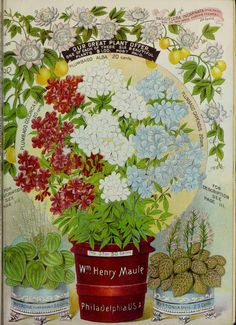 Maule's seed catalogue for 1892