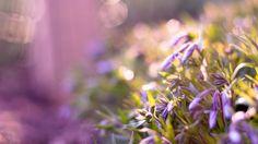 beautiful purple flowers hd free download wallpapers