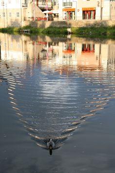 """Pato com .... reflexos! // Pato que resolveu """"estragar"""" o reflexo da paisagem urbana no rio Tâmega em Chaves . 2008 junho // Fto Olh 01 039 pato com ... reflexos! 20080816 0221"""