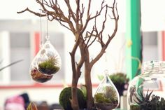 Beautiful hanging terrariums.