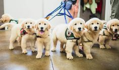 HVAC Company Saves The Day Cooling Off Service Dogs In Training