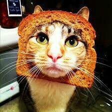 Cat Breading Meme: Pictures Of Cats With Bread On Their Heads | Gurl.com
