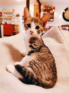 Minäkö keski-ikäinen?: Kissantassuja ja kosmetiikkaa Blur, Nyx, Lifestyle, Cats, Animals, Gatos, Animales, Animaux, Animais