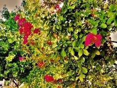 l'ensemble Fotografia Macro, Herbs, Plants, Garden, Pictures, Garten, Planters, Gardening, Outdoor