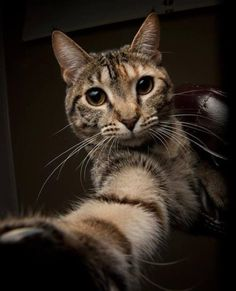 This is what happens when animals take their selfie via - ObviousFun.com