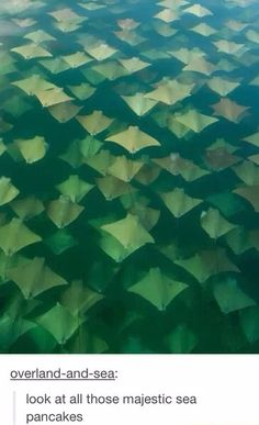 look at all those majestic sea flap flaps - Imgur