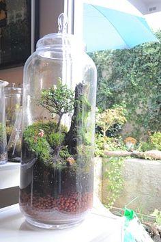 Terrarium & Timmy: Mega bonsai totoro terrarium LOVE LOVE