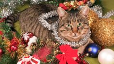 Have-a-Cat-Friendly-Happy-Christmas