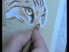 Art lessons 5 Cat Portrait