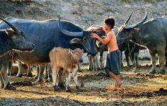 Mùa len Trâu   #Travel #VietNam #ChauDoc #AnGiang
