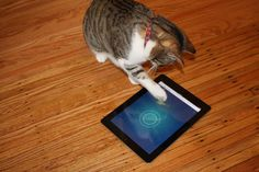 Mon chat est un vrai gamer - jeu iPad pour chats