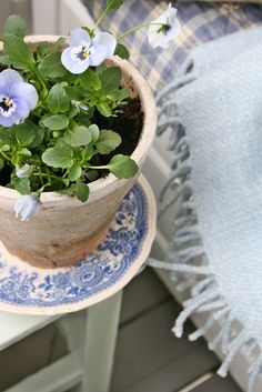 Blue Transferware that is chippy makes great saucers for plants.  I keep a stack of chipped plates right by my pots. ~ Mary Walds Place - VIBEKE DESIGN