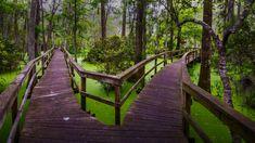 Wooden walkway in the Whooping Crane Pond Conservancy on Hilton Head Island, South Carolina (© Rachid Dahnoun/Tandem Stills + Motion)