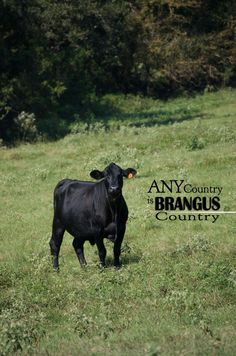 Any Country is BRANGUS Country  De International Brangus Breeders Association