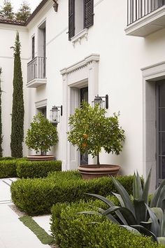 Orange trees, boxwood hedge, succulents.
