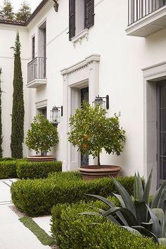 Orange trees, boxwood hedge, succulents.