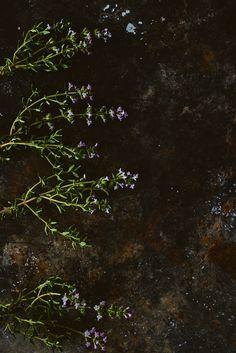 Thyme flower love