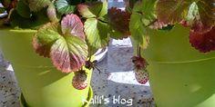 Plant Leaves, Fruit, Plants, Food, Meal, The Fruit, Essen, Flora, Hoods
