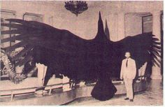 biggest birds in the world - Google Search