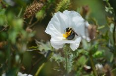 Bees- aren't they sweet as they waggle dance