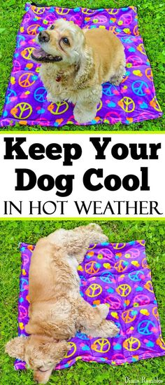 DIY Dog Cooling Mat Sewing Tutorial - Want to keep your dog cooled off this summer? Here is a DIY Dog Cooling Mat Tutorial that will keep your pooch cool while he's outside with the family. Easy Sewing Projects, Sewing Projects For Beginners, Sewing Tutorials, Sewing Tips, Sewing To Sell, Sewing Hacks, Craft Projects, Diy Tumblr, Diy Dog Bed