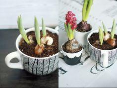angemalte Tassen mit Blumenzwiebeln von http://Mein-feenstaub.blogspot.de