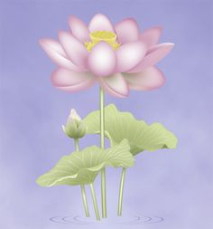 The Lotus, one of the Eight Sacred Symbols in Buddhism  | The lotus symbolizes purity of the body, speech and mind and the blossoming of wholesome deeds in blissful liberation. The fully-opened lotus represents the fully-awakened mind and the flower bud represents Buddha-potential.