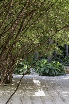 Ideas For Making Your Landscaping Project Run Smoothly - House Garden Landscape Garden Landscape Design, Forest Landscape, Landscape Architecture, Tropical Landscaping, Outdoor Landscaping, Tropical Gardens, Garden Paving, Low Maintenance Landscaping, Royal Garden