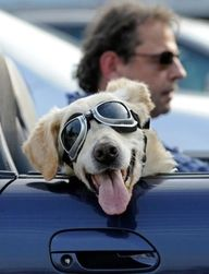 """Dogs = happiness on four legs""  I love his sun glasses, keeps his eyes safe from debris and dryness causing cataracts."
