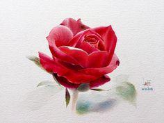 Есть роза дивная... Художник - акварелист La Fe, Тайланд.. Обсуждение на LiveInternet - Российский Сервис Онлайн-Дневников