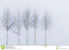 aspen tree winter - Google Search