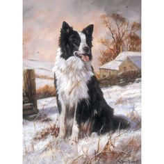 Dark Horse Tack is proud to offer. Ready to Work Blank greeting card. x with envelope. 6 pack each individually cellophane wrapped for your card displays! Dark Horse Tack is the premier suppli Border Collie Art, Royal Palm Beach, Real Dog, Rough Collie, Dog Paintings, Christmas Animals, Card Displays, Dog Quotes, Dark Horse