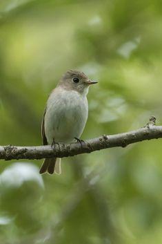 Tiny Bird, Pet Birds, Animals, Animales, Animaux, Animal, Animais