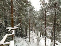 Seikkailupuisto Huippu, vihreä rata. Tree top Adventure Huippu, green course. Hochseilgarten Huippu, grün Route.