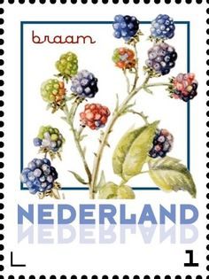 Stamp: Blackberry (Netherlands - Personalized stamps) (Janneke Brinkman-Salentijn-Fruits) Col:NL 2017-071